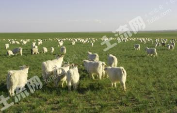 鄂托克2530亩优质天然草场长期转让