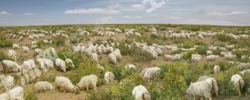 内蒙古鄂尔多斯市鄂托克旗转让2500亩草牧场