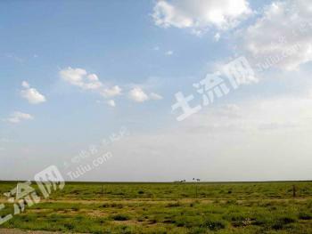 内蒙古鄂尔多斯2800亩优质草牧场转让