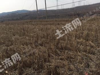 电机水井+5亩农田出租