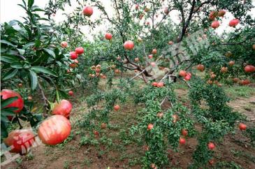 蓟县盘山附近30亩山地果园,自建农家乐