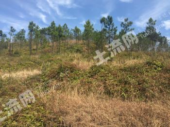 江西吉安永新县1100多亩平缓山地转让(142)