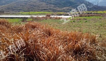 粤北高寒山区旱地荒山耕地承包或合作或出租