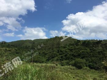 广西贺州市钟山县7543亩桉树、林地出售