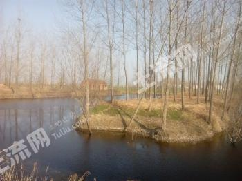 37亩鱼塘及养猪房出租