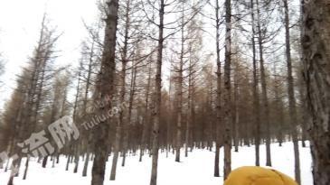 150亩林地永久转让(35年落叶松)