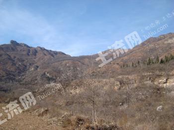 禹州市无梁镇王家村4200亩林权转让
