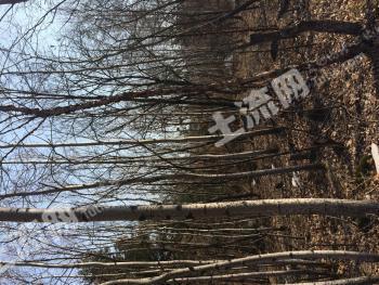 出售人工林60亩