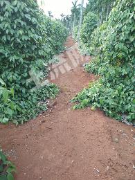 转让15亩农业用地