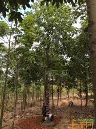 三亚大茅休闲旅游农用地18亩