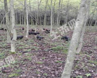 租赁4000亩有林地