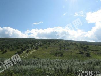内蒙古赤峰市克什克腾旗大片林地牧场出售