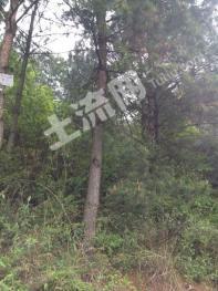 贵州毕节黔西县1000亩山林转让