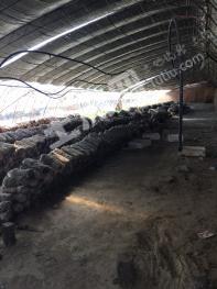 447北京大兴榆垡镇附近20亩大棚转让.