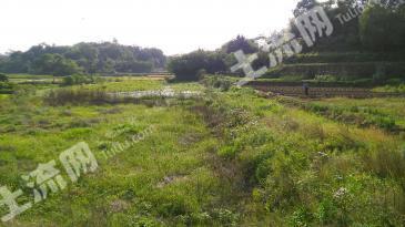 (HY002)衡阳市30亩淡水鱼养殖基地转让