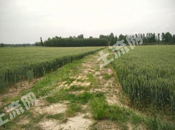 遥墙镇50亩优质耕地整体出租