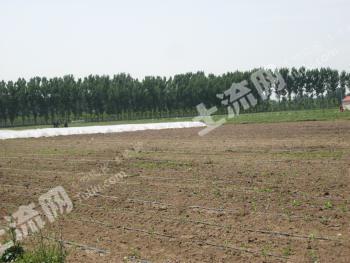 300亩农田寻求合作