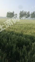转包248亩旱地