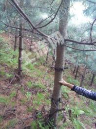 承包山及红松林转让
