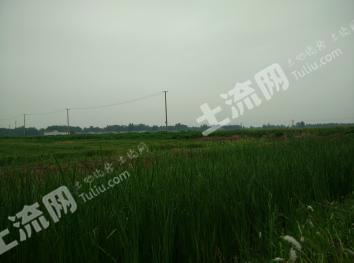 济阳县1000亩优质耕地整体出租