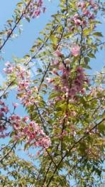 江门恩平市沙湖镇现有460亩花木场低价转让