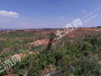 昆明市石林县300亩优质林地转让