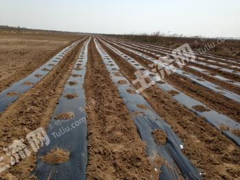 山东滨州260亩土地19万元低价出让