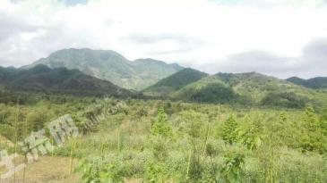 杭州天目山1万亩林山地租售