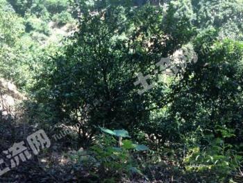 肇庆市广宁2000亩山地/林场低价转让