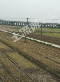 嘉兴新丰镇土地农田出租50亩