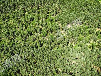 杭州临安市3000余亩林权转让