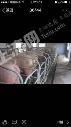 编号SH528曾都区一养猪场出售