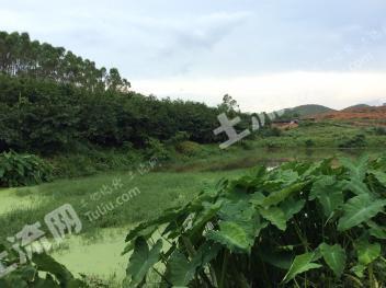 广州从化区有200多亩农业地出租810元/亩
