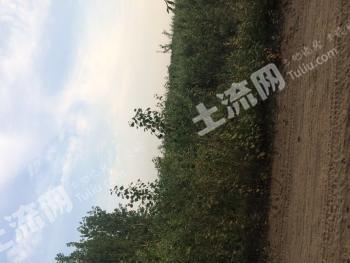 河北沧州吴桥有林地100亩转包,手续齐全