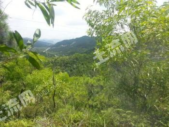 珠海市斗门区1800亩生态山地整体出租/转让