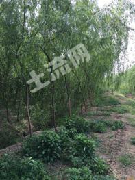 FC2襄阳市樊城区牛首镇300亩农场转让