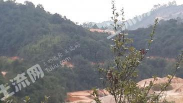 广州市从化鳌头镇2000亩原生态山地招商