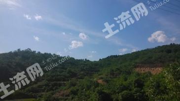 济南市长清区800亩山林、土地转让