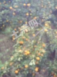 湖北宜昌当阳117亩大型农场出售