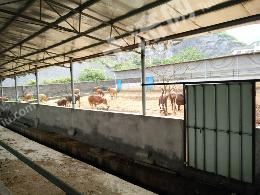租赁50亩旱地和养殖场