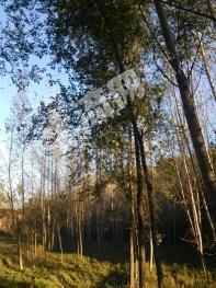 开源农林牧1500亩
