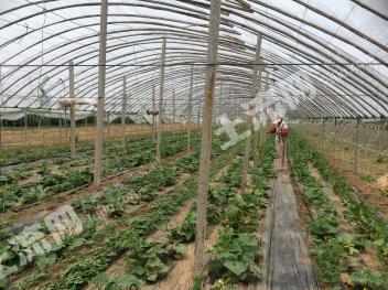 济南  历城区 50亩 设施农用地 出租