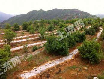 浙江温州平阳1100亩山地