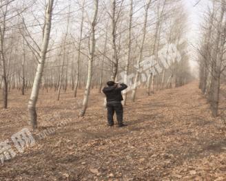 转让1800亩有林地