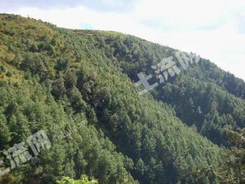 肇庆市四会2800亩山林转让
