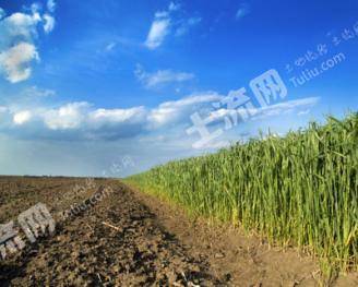 租赁5000亩设施农用地