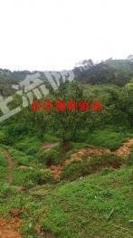 肇庆市德庆县100亩养殖农场低价转让