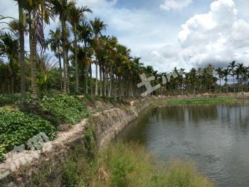立才农场10亩鱼塘/地/房屋出售