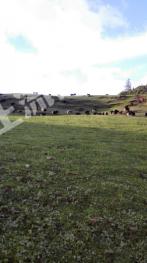 合作800亩农场