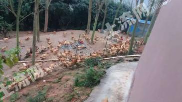 惠州市博罗县100亩生态农场低价转让